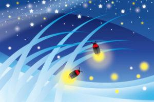 bioluminescence-firefly01