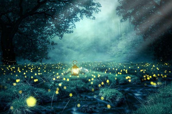 bioluminescence-firefly03