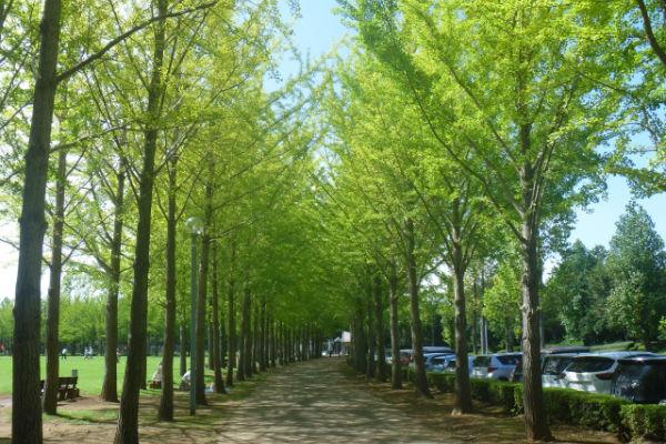 expo85-tsukuba-park02