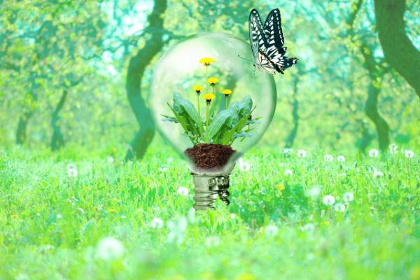 enelabo-nature-electricity03
