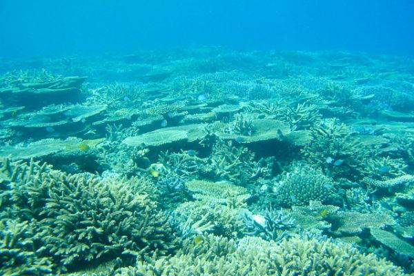 宮古島:「八重干瀬」のサンゴ礁
