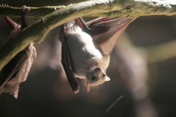 resolabo-boracay-bat-cave02