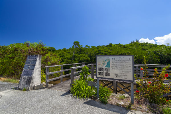 宮古島:島尻のマングローブ林