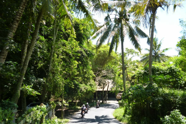 【バリ島:ウブド】ウブドの風景