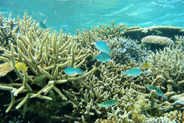 池間島:「八重干瀬」のサンゴ礁