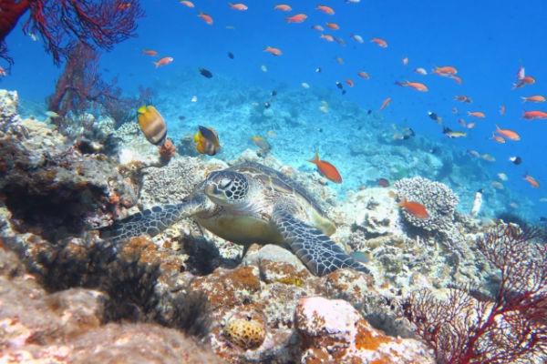 宮古島の海中:ウミガメとサンゴ