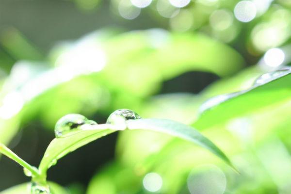 resolabo-miyakojima-rainy-season01